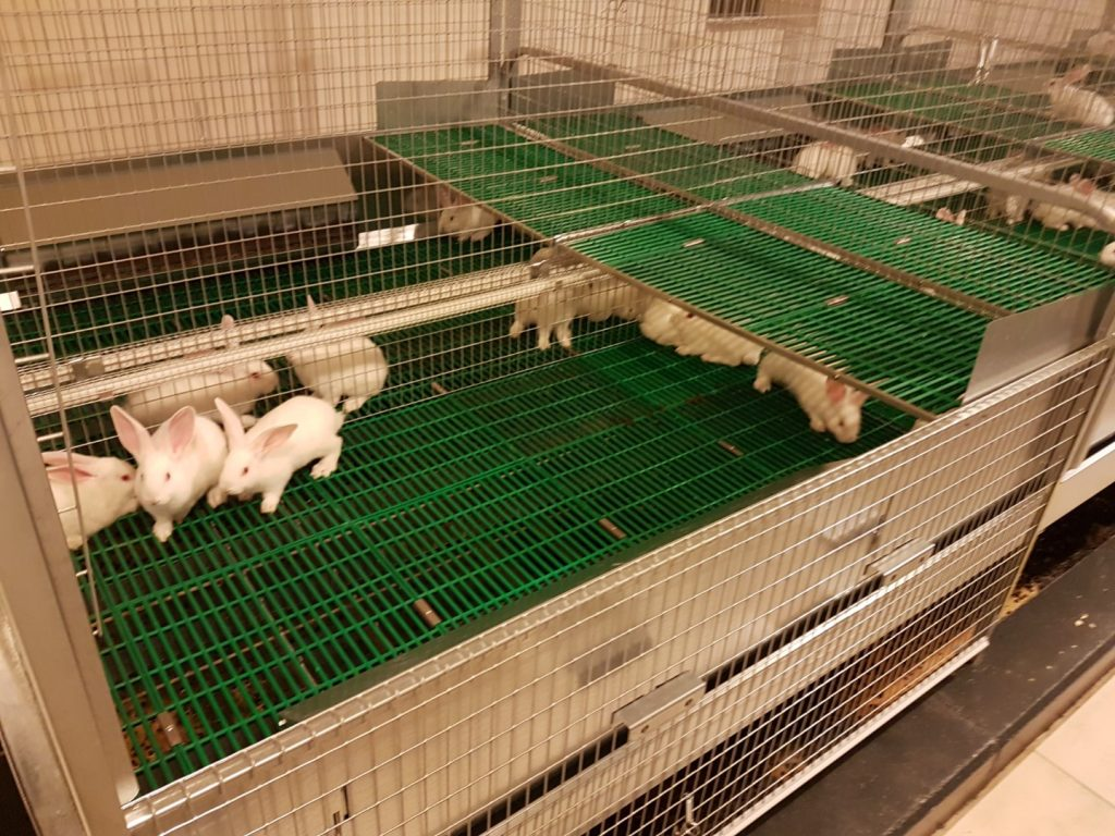 Rabbits – Fattening park with plastic floor